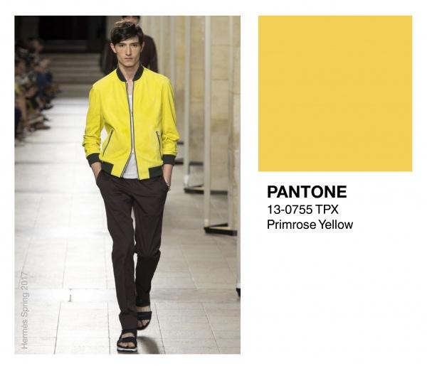 Primrose-yellow1-e1475094415742